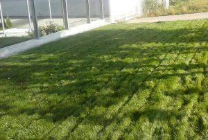 Озеленяване пред офис сграда Sun Systems [11]