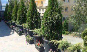 Озеленяване на тераса в офис сграда, гр. София [1]