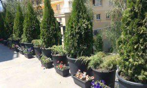 Озеленяване на тераса в офис сграда, гр. София [2]
