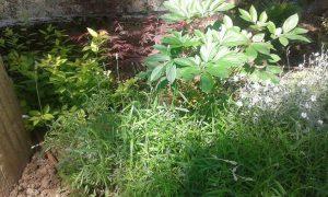 Озеленяване на двор, кв. Драгалевци [5]