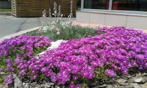 засаждане на цветя в градинки пред офиси