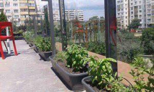 Озеленяване на тераса в офис сграда, гр. София [4]