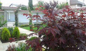 Озеленяване на двор, с. Доброславци [8]