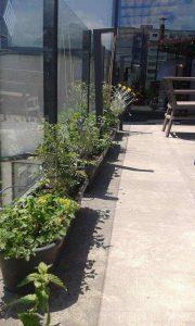 Озеленяване на тераса в офис сграда, гр. София [7]