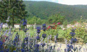 създаване на ароматна градина