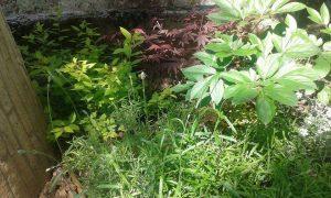 Озеленяване на двор, кв. Драгалевци [9]