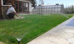 Озеленяване на двор, с. Доброславци [9]