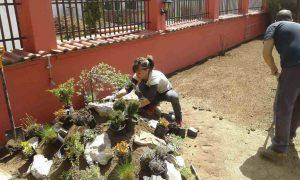 Озеленяване на двор, кв. Модерно предградие [11]