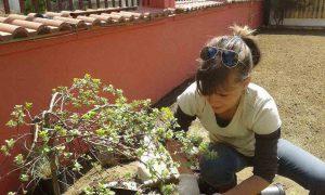 Озеленяване на двор, кв. Модерно предградие [12]