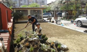 Озеленяване на двор, кв. Модерно предградие [15]