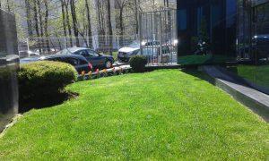 Озеленяване на зелени площи пред офис сграда [3]