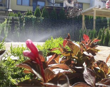 Озеленяване на двор, кв. Кръстова вада [7]