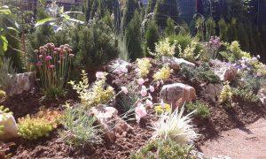 Озеленяване на двор, кв. Кръстова вада [21]