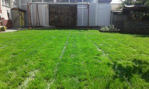 Озеленяване на двор, кв. Левски [7]