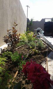 Озеленяване на двор, кв. Левски [10]