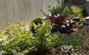 Озеленяване на двор, кв. Левски [8]