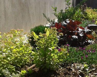 Озеленяване на двор, кв. Левски [3]