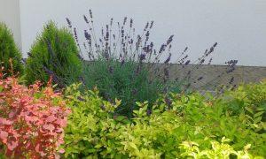 Озеленяване на двор, с. Доброславци [12]