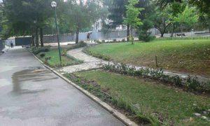 Засаждане на жив плет в двора на Немско училище към Немско посолство, гр. София [15]