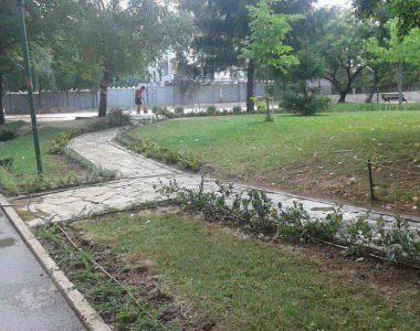 Засаждане на жив плет в двора на Немско училище към Немско посолство, гр. София [4]