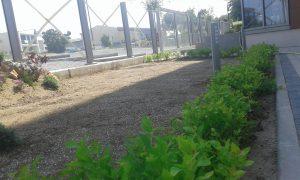 Озеленяване пред офис сграда Sun Systems [1]