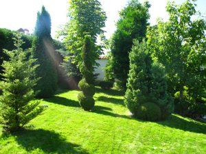 Поддържане и озеленяване на двор Горна Баня [14]