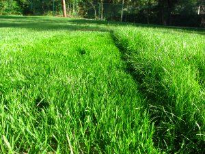 затревяване на задния двор