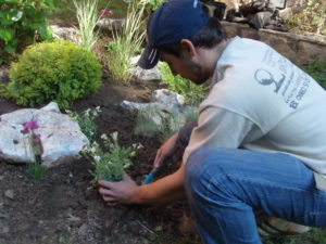 Поддръжка и озеленяване на двор, кв. Симеоново [8]