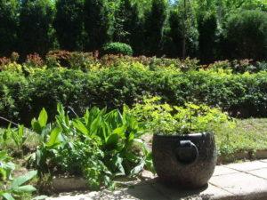 Поддръжка и озеленяване на двор, кв. Симеоново [3]