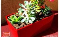 Неустоимо предложение за сукуленти и кактуси аранжирани в кашпи [1]