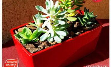 Неустоимо предложение за сукуленти и кактуси аранжирани в кашпи [10]