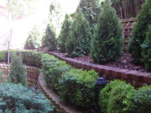"""Озеленяване на площи пред Агенция """"Фокус"""" [1]"""