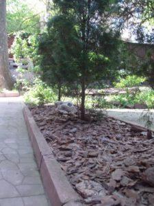 """Озеленяване на площи пред Агенция """"Фокус"""" [15]"""