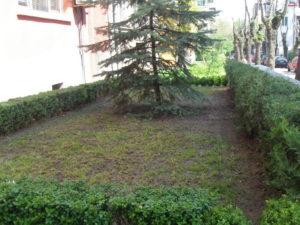 """Озеленяване на площи пред Агенция """"Фокус"""" [14]"""