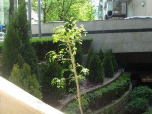 """Озеленяване на площи пред Агенция """"Фокус"""" [13]"""