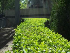 """Озеленяване на площи пред Агенция """"Фокус"""" [9]"""