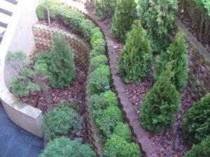 """Озеленяване на площи пред Агенция """"Фокус"""" [8]"""