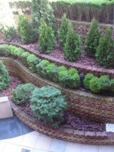 """Озеленяване на площи пред Агенция """"Фокус"""" [7]"""