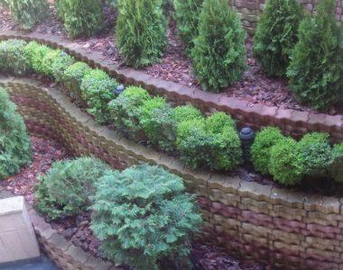 """Озеленяване на площи пред Агенция """"Фокус"""" [5]"""