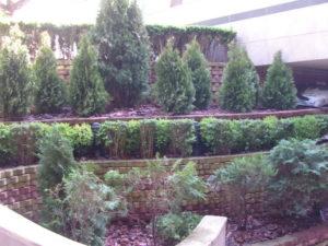 """Озеленяване на площи пред Агенция """"Фокус"""" [6]"""