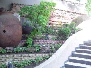 """Озеленяване на площи пред Агенция """"Фокус"""" [4]"""