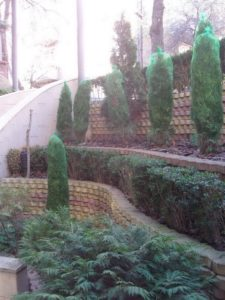 """Озеленяване на площи пред Агенция """"Фокус"""" [3]"""