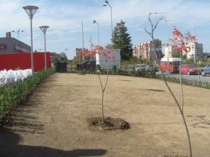 Озеленяване заведение KFC Люлин [36]