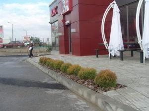 """Озеленяване заведение KFC """"Владимир Вазов"""" [7]"""