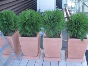 Изграждане на поливна система и озеленяване на тераса, кв. Лозенец [7]