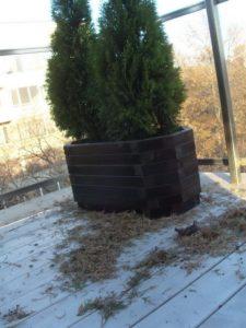 Изграждане на поливна система и озеленяване на тераса, кв. Лозенец [5]
