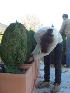 Изграждане на поливна система и озеленяване на тераса, кв. Лозенец [4]