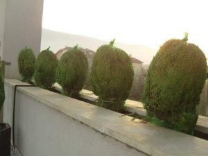 Изграждане на поливна система и озеленяване на тераса, кв. Лозенец [3]