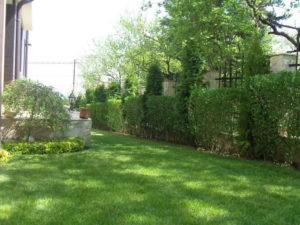 вертикално озеленяване на дворове
