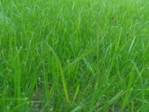 съвети за съдене на трева